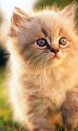 Download free mobile wallpaper 44285: Cats,Animals for phone or tab. Download images, backgrounds and wallpapers for mobile phone for free.