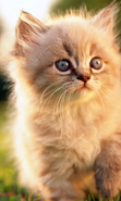Download free mobile wallpaper 47570: Cats,Animals for phone or tab. Download images, backgrounds and wallpapers for mobile phone for free.