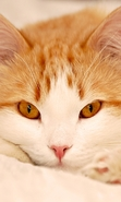 Download free mobile wallpaper 47610: Cats,Animals for phone or tab. Download images, backgrounds and wallpapers for mobile phone for free.
