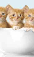 Download free mobile wallpaper 47892: Cats,Animals for phone or tab. Download images, backgrounds and wallpapers for mobile phone for free.