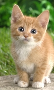 Download free mobile wallpaper 48062: Cats,Animals for phone or tab. Download images, backgrounds and wallpapers for mobile phone for free.