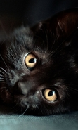 Download free mobile wallpaper 48388: Cats,Animals for phone or tab. Download images, backgrounds and wallpapers for mobile phone for free.