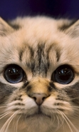 Download free mobile wallpaper 49016: Cats,Animals for phone or tab. Download images, backgrounds and wallpapers for mobile phone for free.