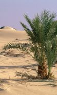 Download free mobile wallpaper 22898: Palms, Landscape, Sand, Desert, Plants for phone or tab. Download images, backgrounds and wallpapers for mobile phone for free.