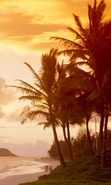 Download free mobile wallpaper 50299: Palms,Landscape,Beach,Nature for phone or tab. Download images, backgrounds and wallpapers for mobile phone for free.