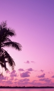 Download free mobile wallpaper 46120: Palms,Landscape,Nature for phone or tab. Download images, backgrounds and wallpapers for mobile phone for free.