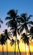 Download free mobile wallpaper 49314: Palms,Landscape,Nature,Sunset for phone or tab. Download images, backgrounds and wallpapers for mobile phone for free.