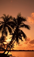Download free mobile wallpaper 40365: Palms,Landscape,Sunset for phone or tab. Download images, backgrounds and wallpapers for mobile phone for free.
