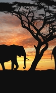 Download free mobile wallpaper 49346: Landscape,Elephants,Animals for phone or tab. Download images, backgrounds and wallpapers for mobile phone for free.