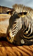 Download free mobile wallpaper 47943: Landscape,Zebra,Animals for phone or tab. Download images, backgrounds and wallpapers for mobile phone for free.
