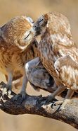 Download free mobile wallpaper 27775: Birds, Owl, Animals for phone or tab. Download images, backgrounds and wallpapers for mobile phone for free.
