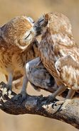 Download free mobile wallpaper 28478: Birds, Owl, Animals for phone or tab. Download images, backgrounds and wallpapers for mobile phone for free.