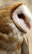 Download free mobile wallpaper 46128: Birds,Owl,Animals for phone or tab. Download images, backgrounds and wallpapers for mobile phone for free.