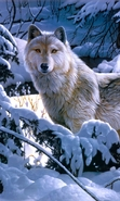 Download free mobile wallpaper 45911: Pictures,Wolfs,Animals for phone or tab. Download images, backgrounds and wallpapers for mobile phone for free.