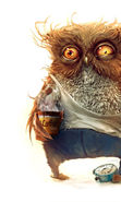 Download free mobile wallpaper 12089: Humor, Animals, Owl for phone or tab. Download images, backgrounds and wallpapers for mobile phone for free.