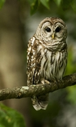 Download free mobile wallpaper 45008: Owl,Animals for phone or tab. Download images, backgrounds and wallpapers for mobile phone for free.