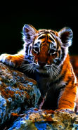 Download free mobile wallpaper 27023: Tigers, Animals for phone or tab. Download images, backgrounds and wallpapers for mobile phone for free.
