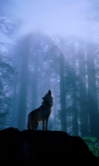 Download free mobile wallpaper 36213: Wolfs,Animals for phone or tab. Download images, backgrounds and wallpapers for mobile phone for free.