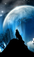 Download free mobile wallpaper 39391: Wolfs,Animals for phone or tab. Download images, backgrounds and wallpapers for mobile phone for free.