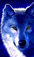 Download free mobile wallpaper 43887: Wolfs,Animals for phone or tab. Download images, backgrounds and wallpapers for mobile phone for free.