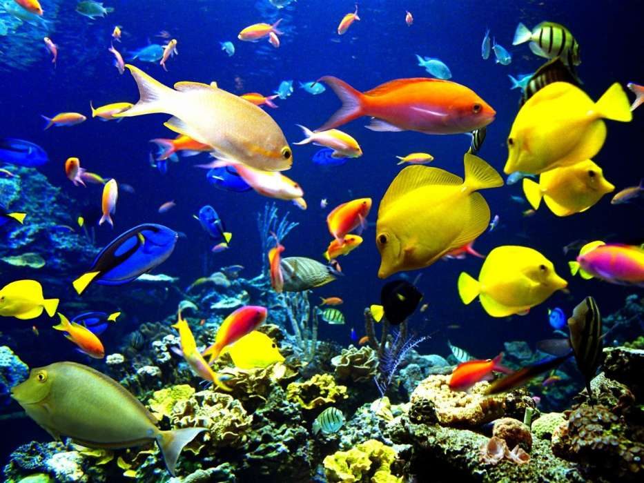 Download mobile wallpaper Animals, Aquariums, Fishes for free.