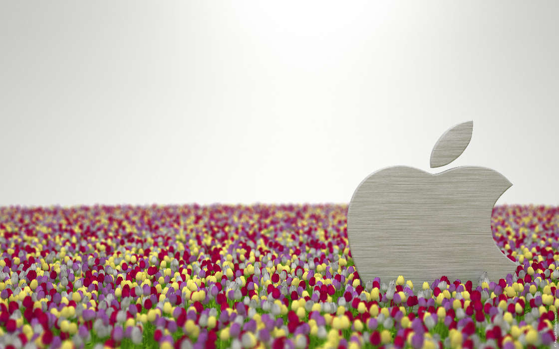 Download mobile wallpaper Plants, Brands, Flowers, Logos, Apple for free.