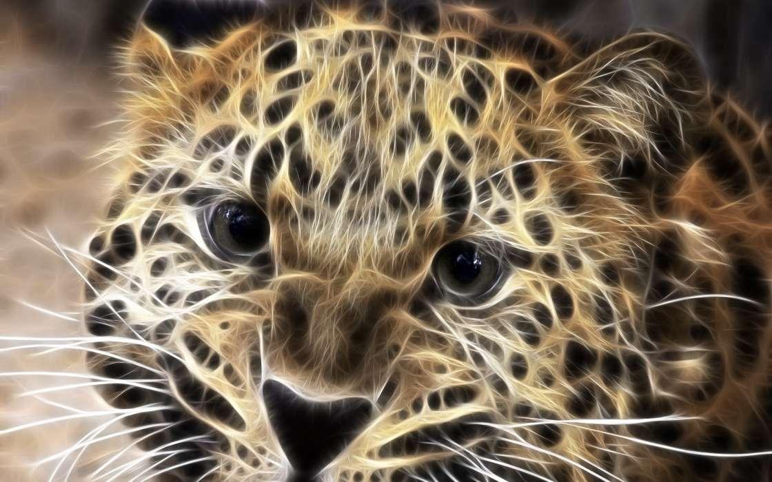 Картинки пол, крутые картинки животных