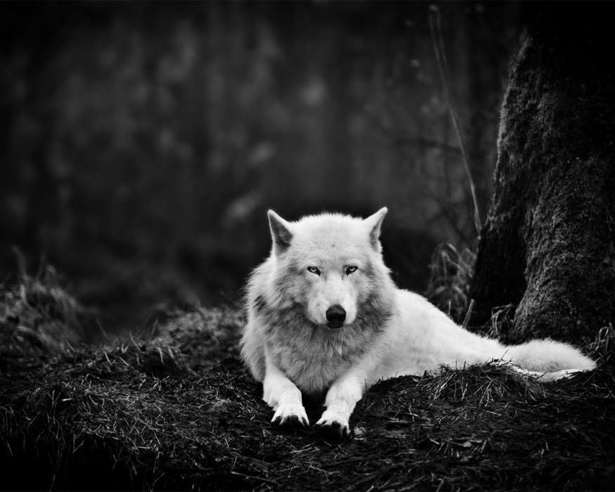 Download mobile wallpaper Animals, Wolfs, Art photo for free.