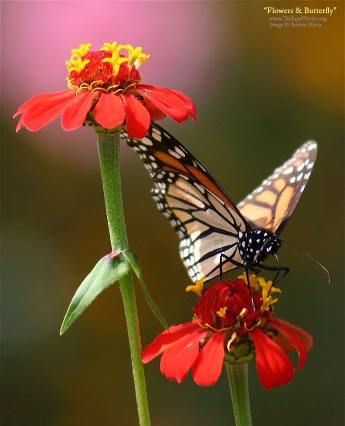 Download mobile wallpaper Plants, Butterflies, Flowers, Insects for free.