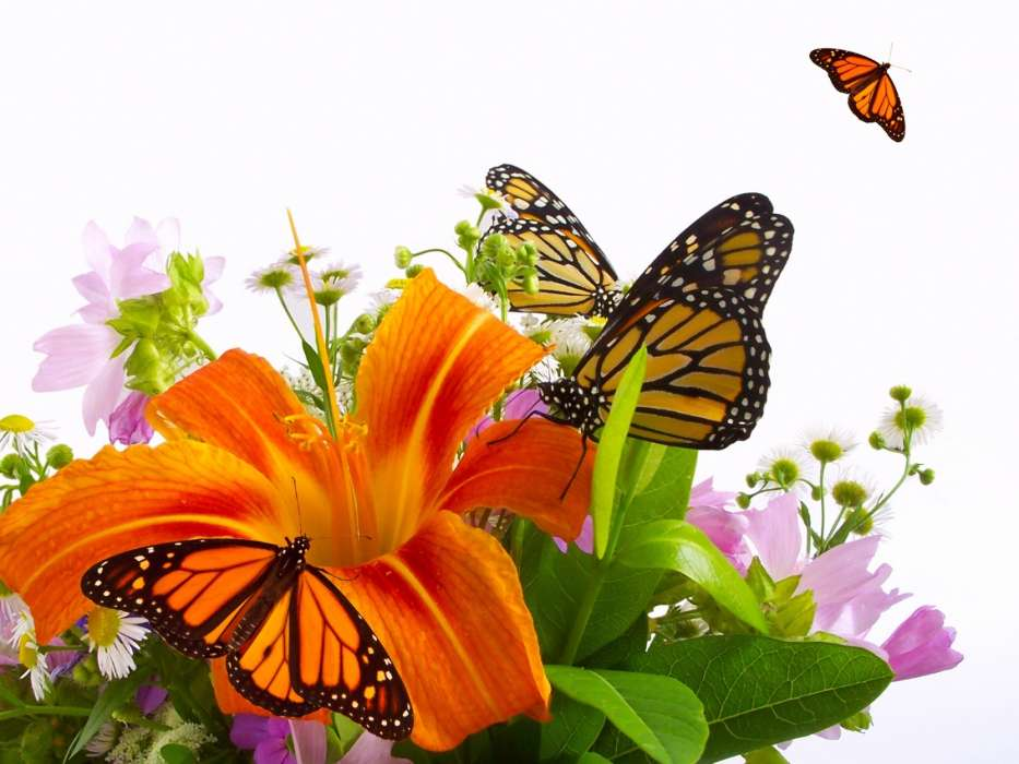 Download mobile wallpaper Butterflies, Insects for free.