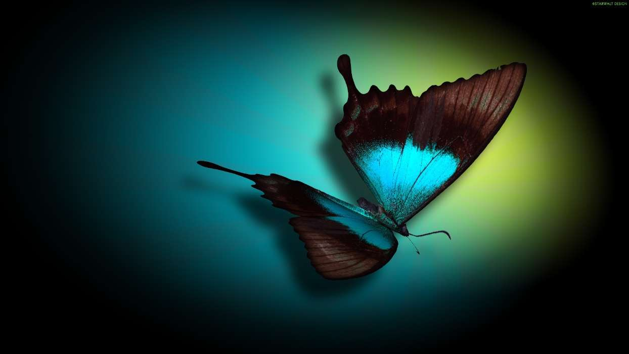 Download mobile wallpaper Butterflies, Insects, Pictures for free.