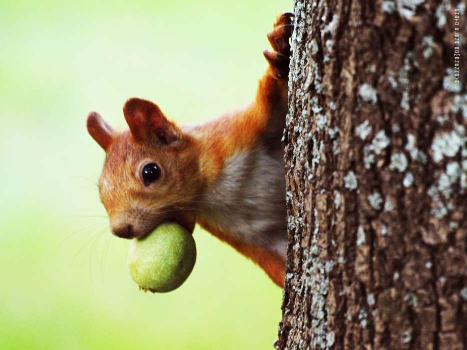 Download mobile wallpaper Animals, Squirrel for free.