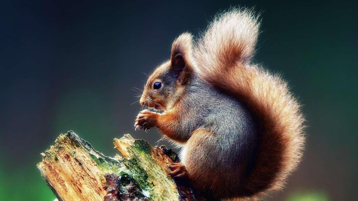 Картинки о животных и природе