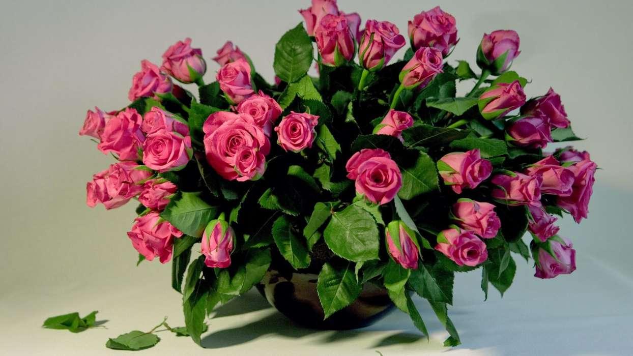 t l chargez une image sur votre t l phone plantes roses bouquets gratuitement 39922. Black Bedroom Furniture Sets. Home Design Ideas