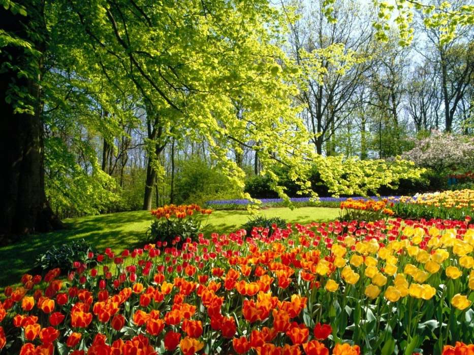 Download mobile wallpaper Plants, Landscape, Flowers, Trees, Tulips for free.