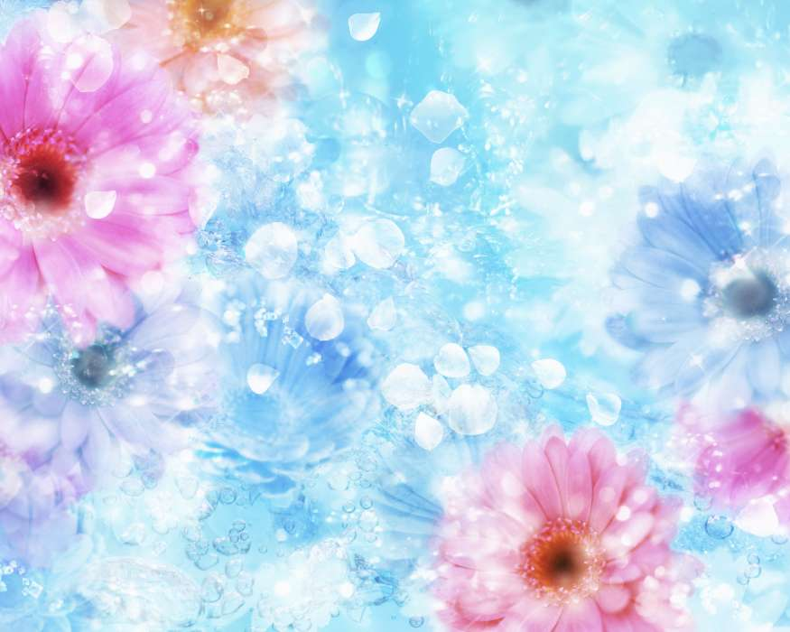 Download mobile wallpaper Flowers, Background for free.