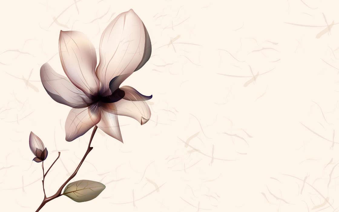 Download Bilder Für Das Handy: Blumen, Hintergrund