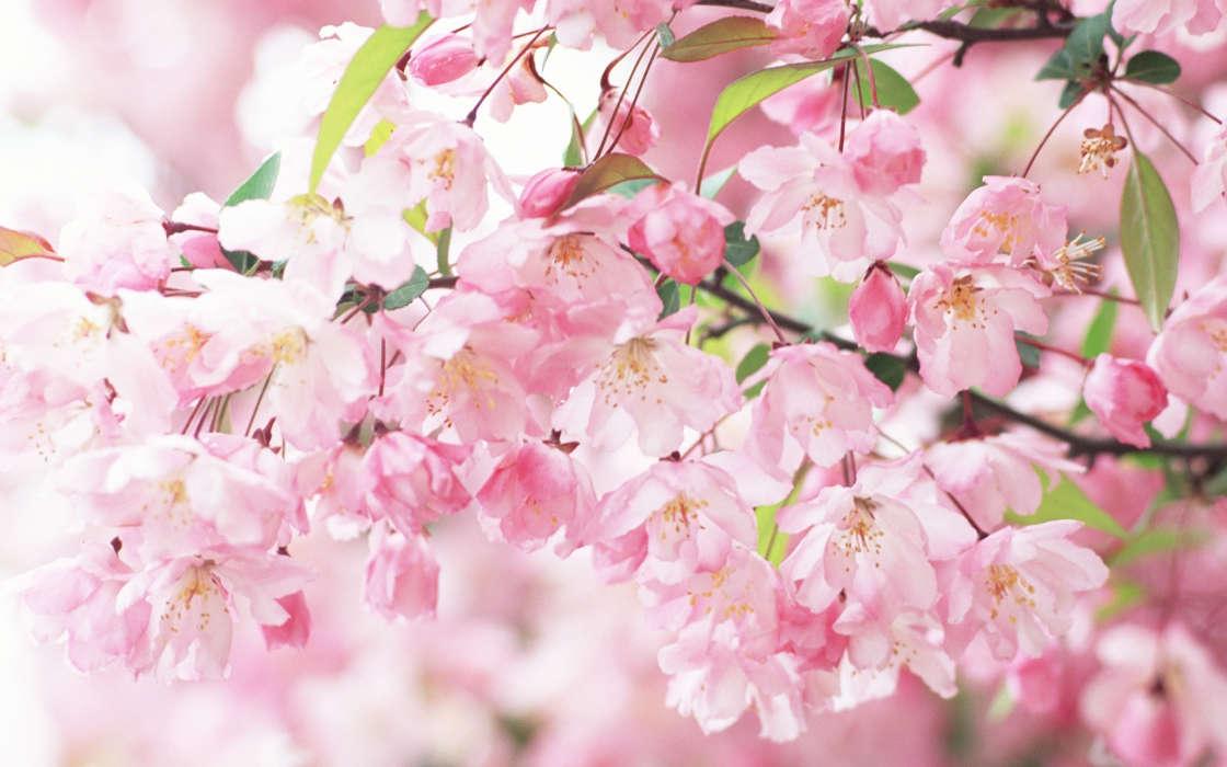 Download Bilder Für Das Handy Pflanzen Blumen Hintergrund