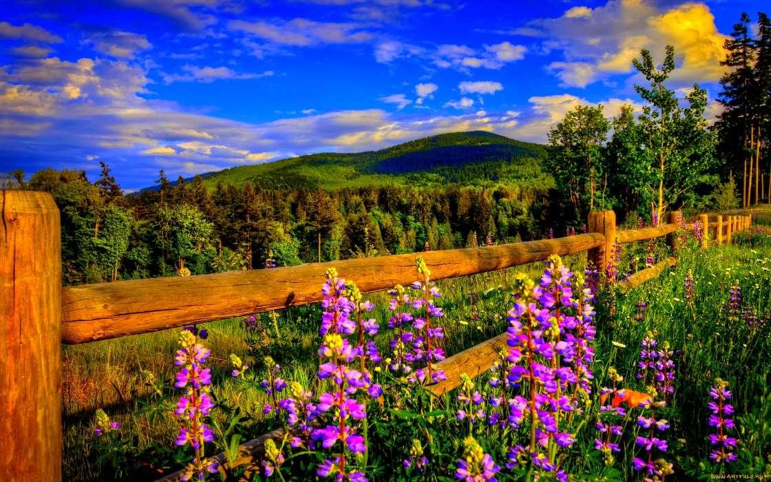 собрали так вертикальное фото цветы на фоне пейзажа полевые рисунком клеятся