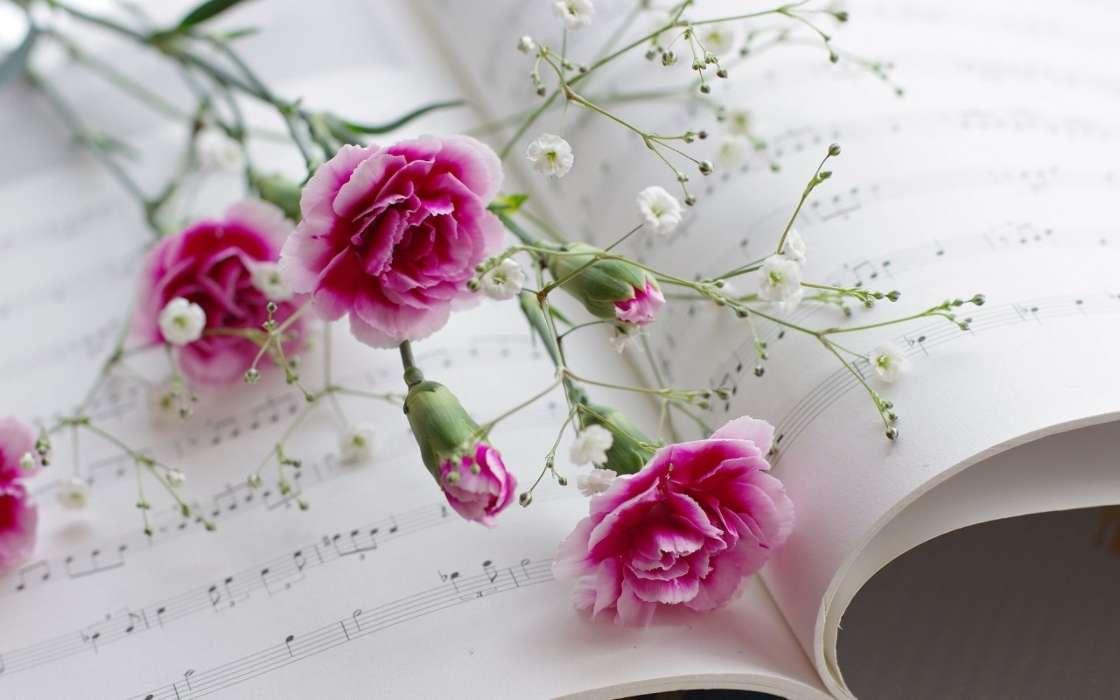 Download Bilder Für Das Handy Pflanzen Blumen Nelken Kostenlos