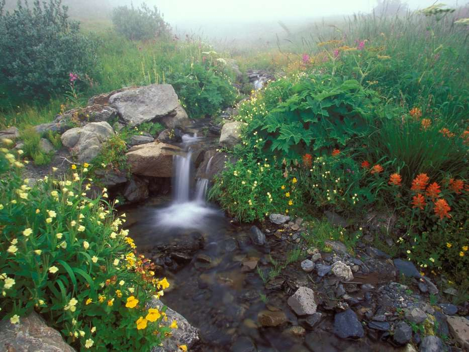 Download mobile wallpaper Landscape, Flowers, Rivers, Stones for free.
