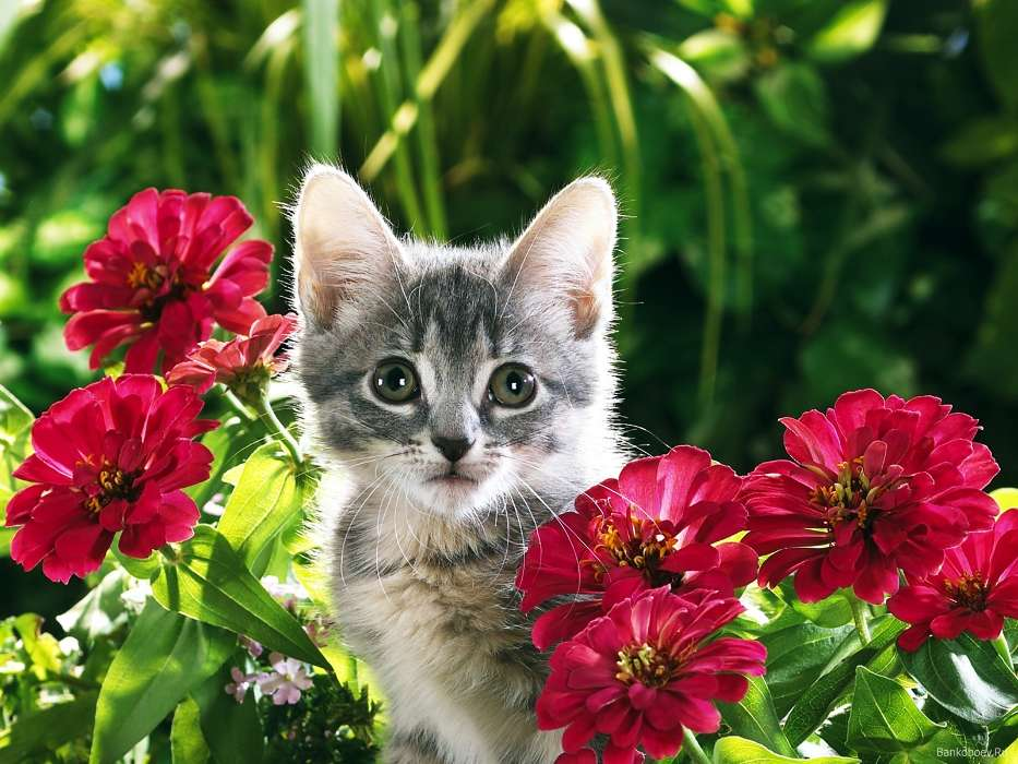 Download mobile wallpaper Animals, Plants, Cats, Flowers for free.