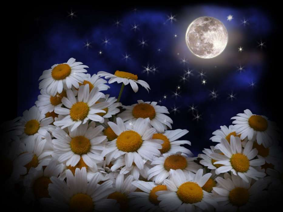 Download mobile wallpaper Plants, Flowers, Moon, Camomile for free.