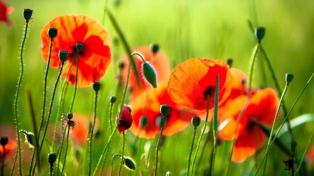 Картинка с летними цветами