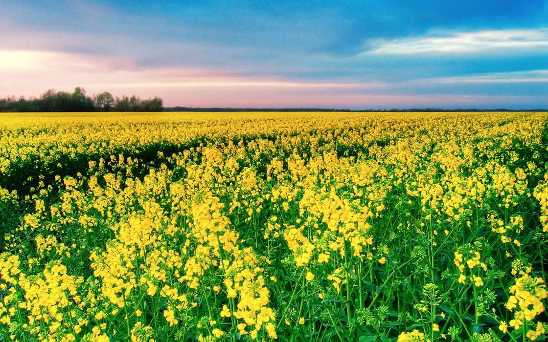 Download mobile wallpaper Landscape, Flowers, Fields for free.