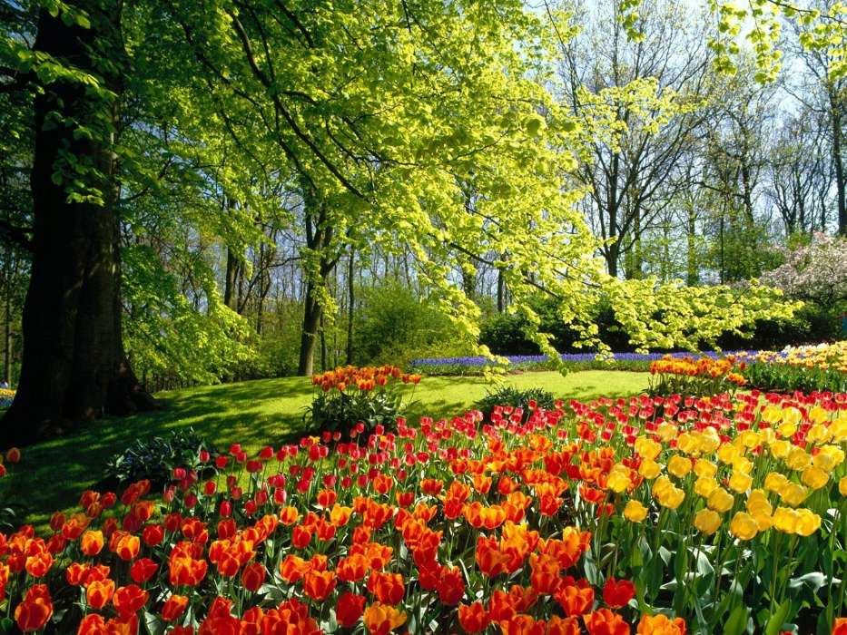 Download mobile wallpaper Landscape, Nature, Flowers, Tulips for free.