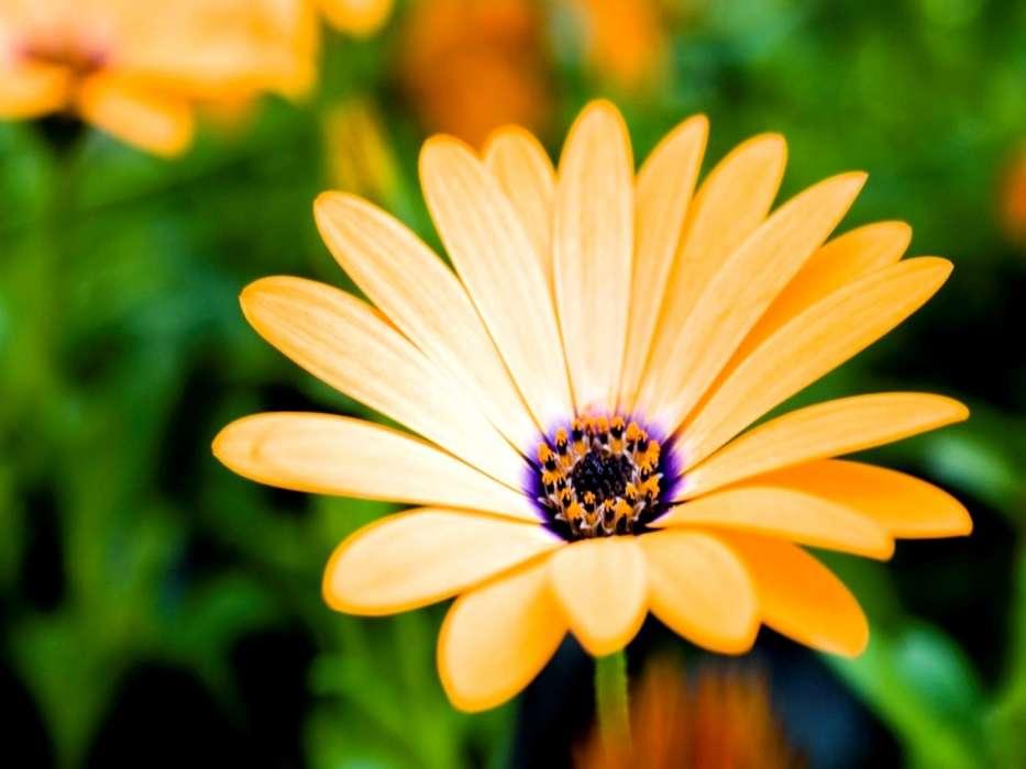 download bilder für das handy pflanzen blumen kostenlos