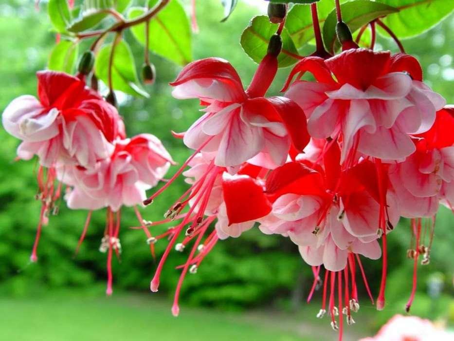 Download Mobile Wallpaper Plants Flowers Free 34523