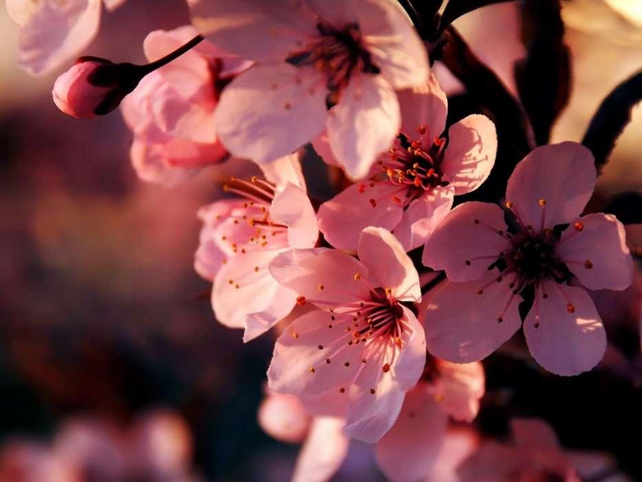Download Bilder Für Das Handy Pflanzen Blumen Kostenlos 35329