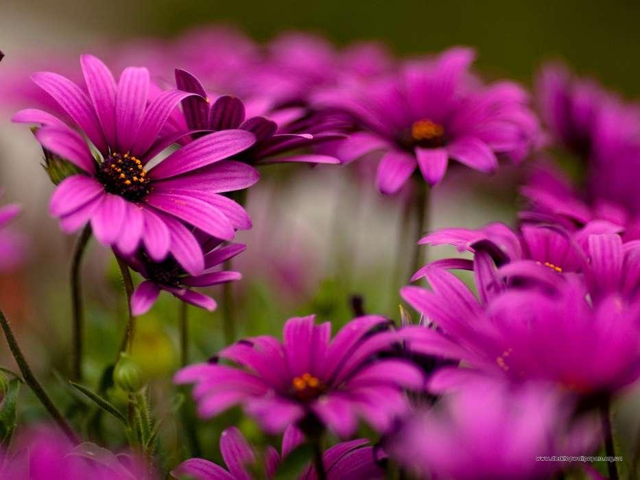 t l chargez une image sur votre t l phone plantes fleurs gratuitement 9437. Black Bedroom Furniture Sets. Home Design Ideas